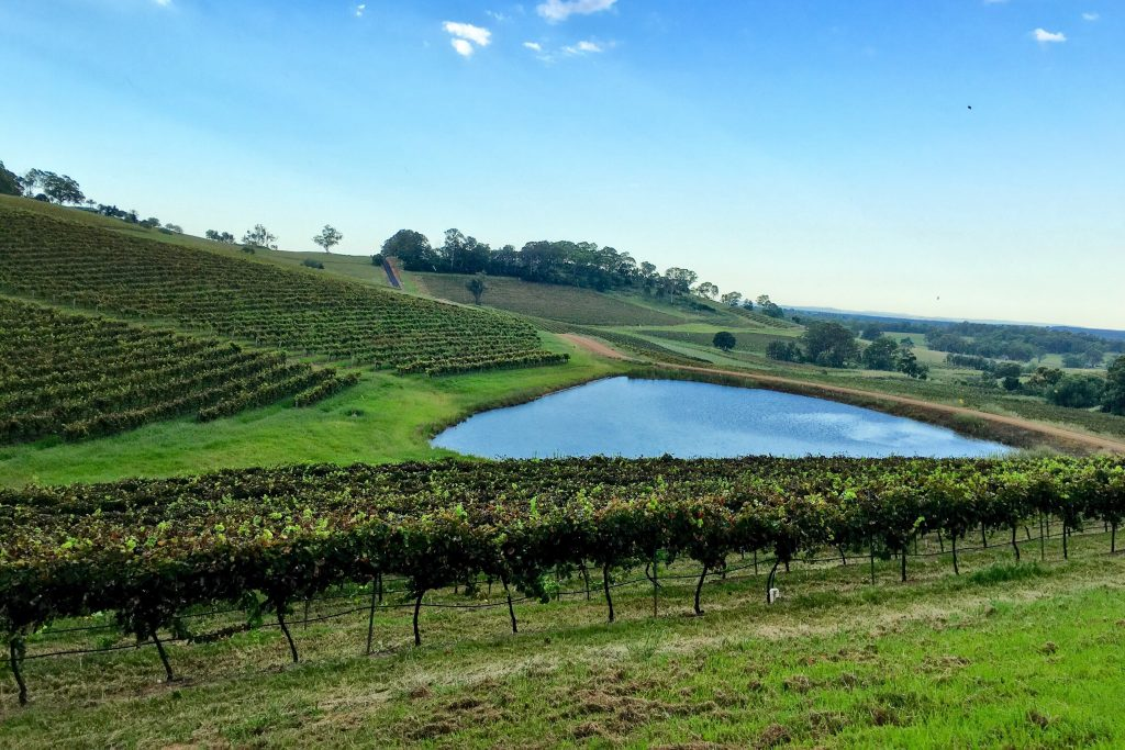 Port Macquarie Hunter Valley Vineyard