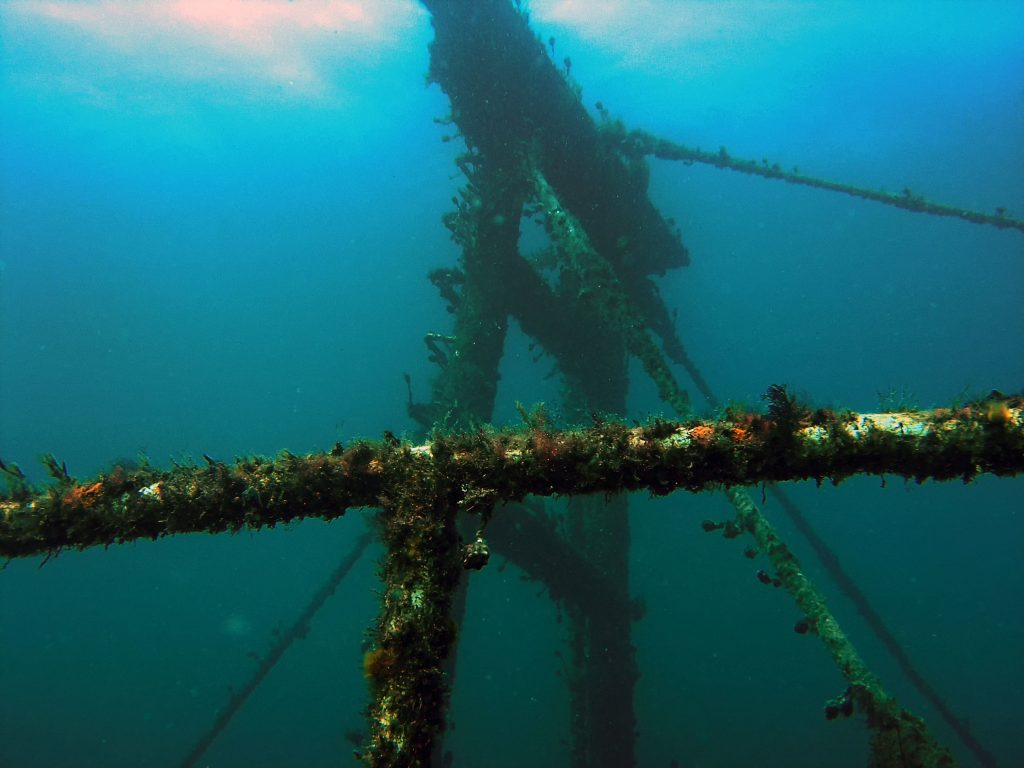 The wreck of the Lena in Bunbury, Western Australia under the sea