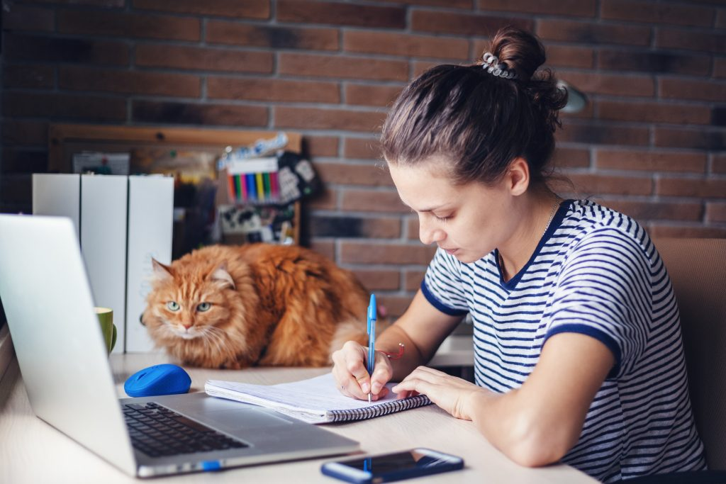 Girl student freelancer working with laptop at home by the window with cat