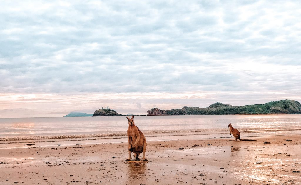 Become a travel nurse Cape Hillsborough kangaroos beach